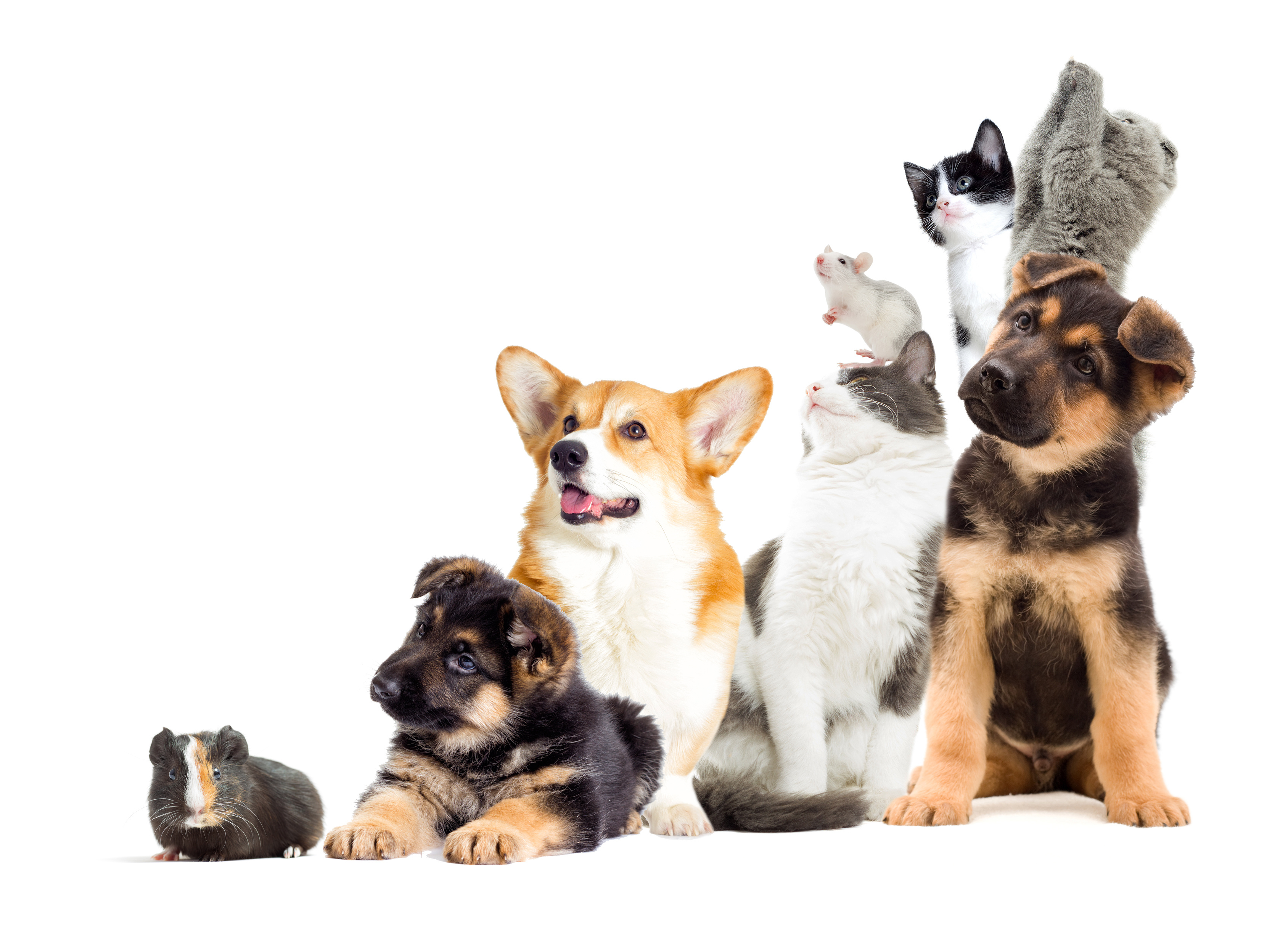 Plusbac pets